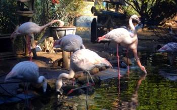 Vallée des oiseaux